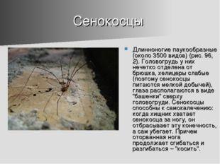 Сенокосцы Длинноногие паукообразные (около 3500 видов) (рис. 96, 2). Головогр