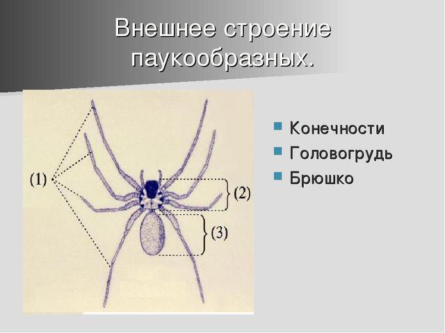 Внешнее строение паукообразных. Конечности Головогрудь Брюшко
