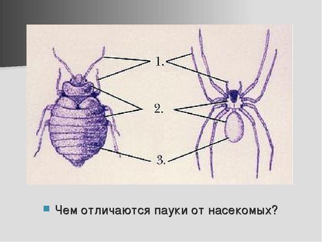 Чем отличаются пауки от насекомых?