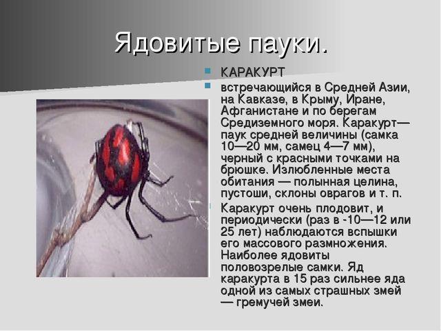 Ядовитые пауки. КАРАКУРТ встречающийся в Средней Азии, на Кавказе, в Крыму, И...