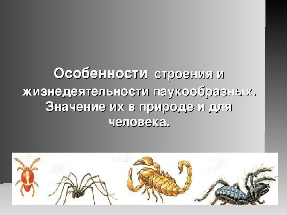 Особенности строения и жизнедеятельности паукообразных. Значение их в природе...