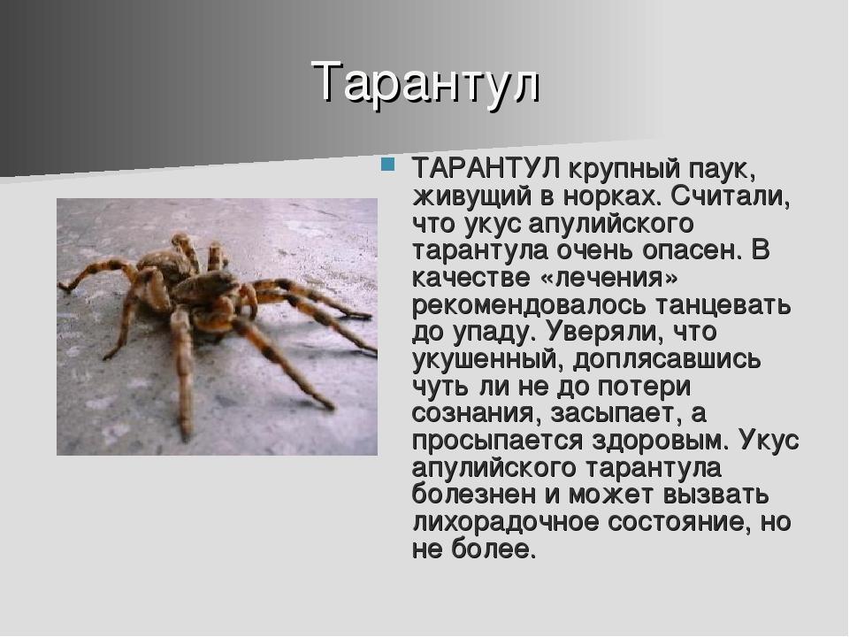 Тарантул ТАРАНТУЛ крупный паук, живущий в норках. Считали, что укус апулийско...