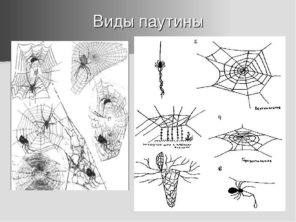 Виды паутины