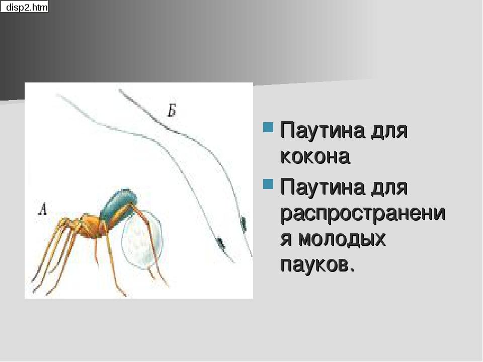 Паутина для кокона Паутина для распространения молодых пауков.