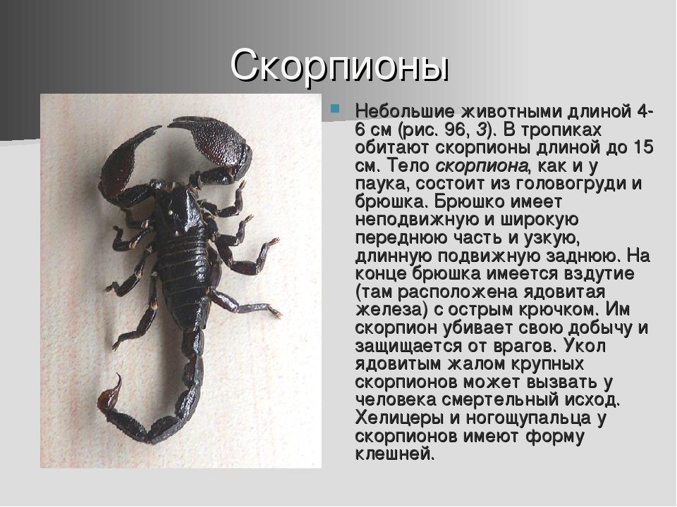 Скорпионы Небольшие животными длиной 4-6 см (рис. 96, 3). В тропиках обитают...