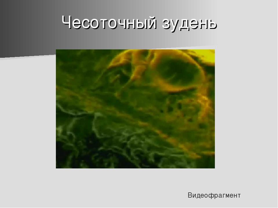 Чесоточный зудень Видеофрагмент
