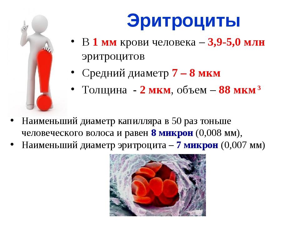 В 1 мм крови человека – 3,9-5,0 млн эритроцитов Средний диаметр 7 – 8 мкм Тол...