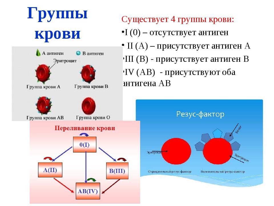 Группы крови Существует 4 группы крови: I (0) – отсутствует антиген II (А) –...