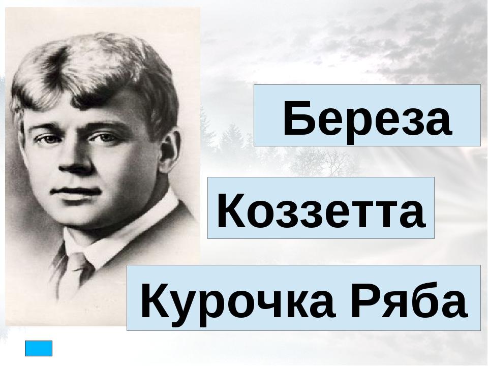 Береза Коззетта Курочка Ряба