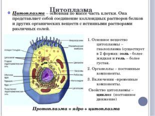 Цитоплазма Цитоплазма – основная по массе часть клетки. Она представляет собо