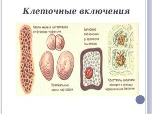 Вакуолярная система- одномембранные органоиды ЭПС Комплекс Гольджи Лизосомы В
