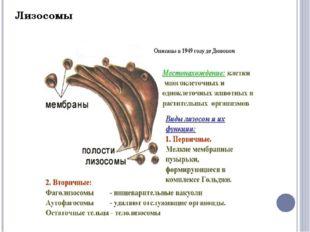 Вакуоли. Лизосома. Функции центральной вакуоли: Накопление питательных вещест