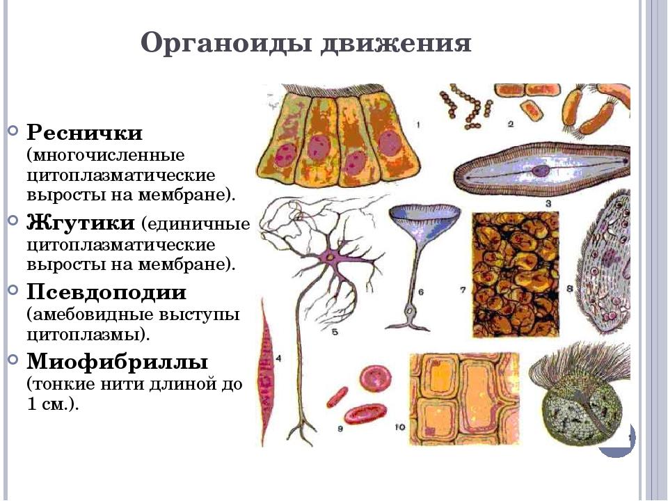 Вопрос. Какие органоиды изображены на данных рисунках? 1 2 3 4 6 5