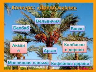 Вельвичия Баобаб Банан Кофейное дерево Масличная пальма Акация Колбасное дере