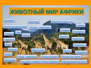 Африканский слон Бегемот Жираф Верблюд-дромедар Крокодил Леопард Гепард Лев П