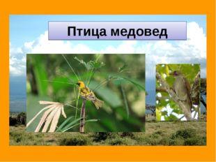 Птица медовед