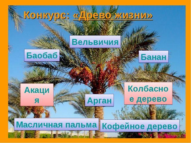 Вельвичия Баобаб Банан Кофейное дерево Масличная пальма Акация Колбасное дере...