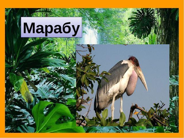 Марабу