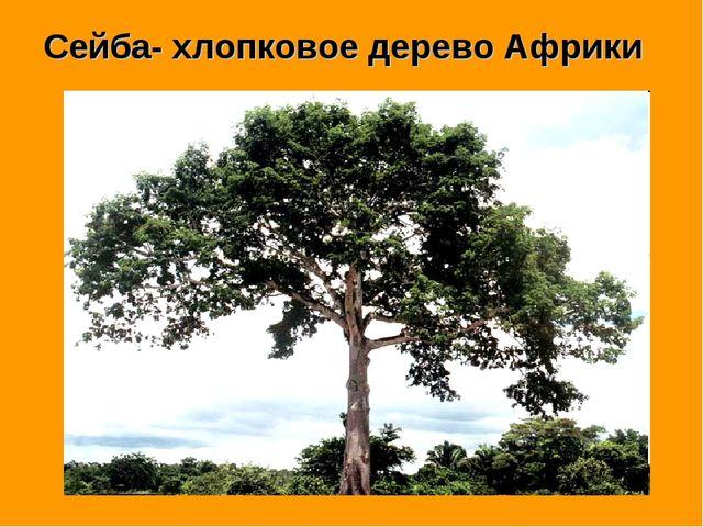 Сейба- хлопковое дерево Африки
