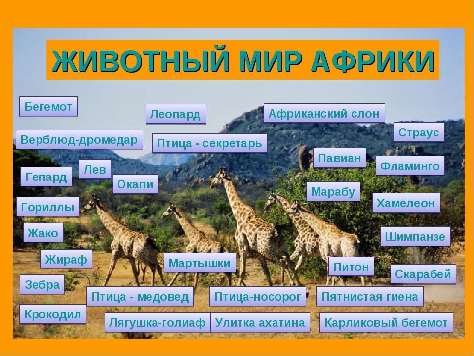 Африканский слон Бегемот Жираф Верблюд-дромедар Крокодил Леопард Гепард Лев П...
