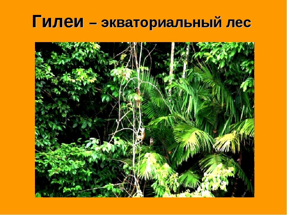 Гилеи – экваториальный лес