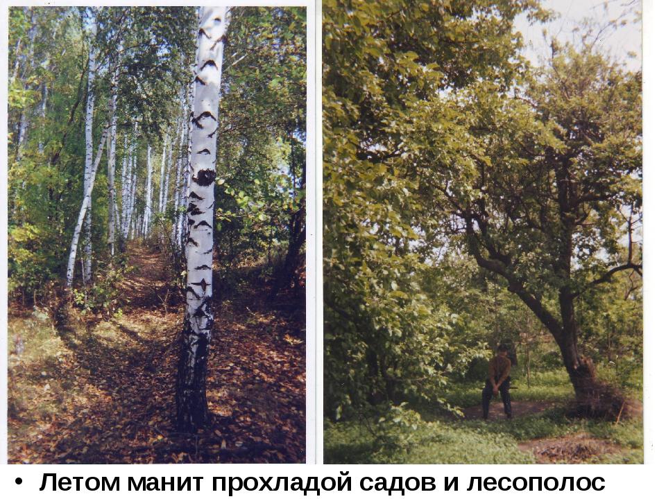 Летом манит прохладой садов и лесополос