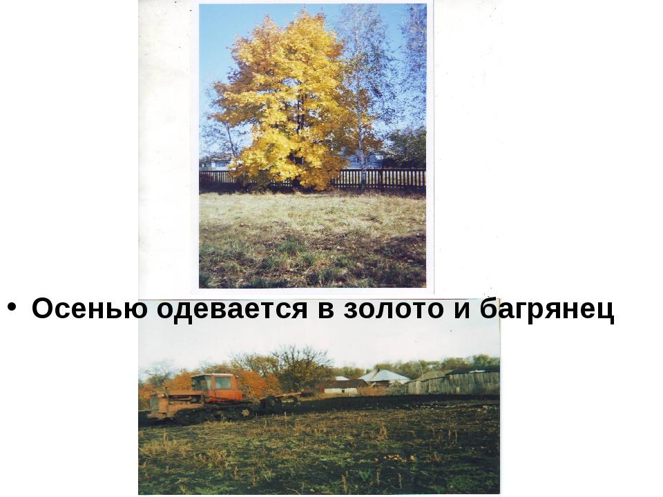 Осенью одевается в золото и багрянец