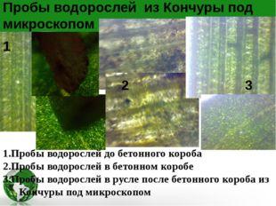 1.Пробы водорослей до бетонного короба 2.Пробы водорослей в бетонном коробе 3