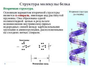 Структура молекулы белка Вторичная структура. Основным вариантом вторичной ст