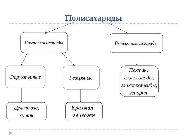 Полисахариды Гомополисахариды Гетерополисахариды Структурные Резервные Пектин...