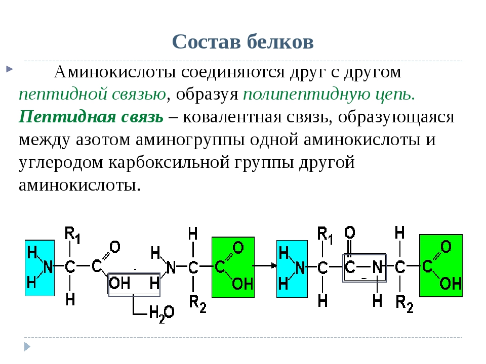 Состав белков Аминокислоты соединяются друг с другом пептидной связью, образ...
