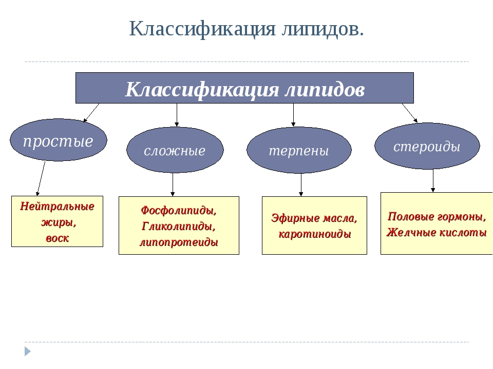Классификация липидов. Классификация липидов простые сложные терпены стероиды...
