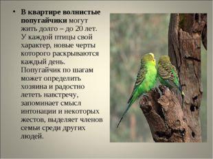 В квартире волнистые попугайчики могут жить долго – до 20 лет. У каждой птицы