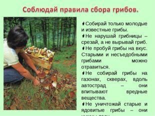 Собирай только молодые и известные грибы. Не нарушай грибницы – срезай, а не
