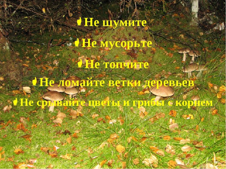 Не шумите Не мусорьте Не топчите Не ломайте ветки деревьев Не срывайте цветы...
