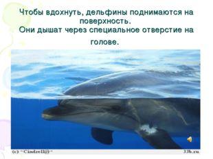Чтобы вдохнуть, дельфины поднимаются на поверхность. Они дышат через специаль