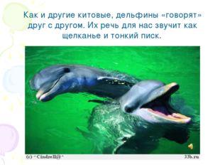 Как и другие китовые, дельфины «говорят» друг с другом. Их речь для нас звучи