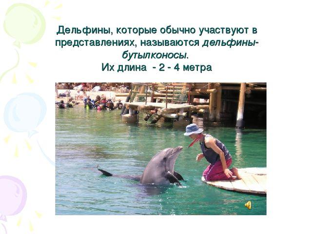 Дельфины, которые обычно участвуют в представлениях, называются дельфины-бут...