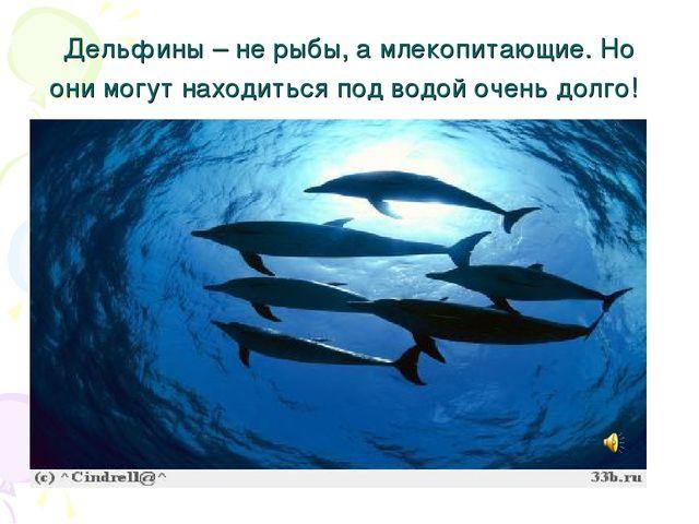 Дельфины – не рыбы, а млекопитающие. Но они могут находиться под водой очень...