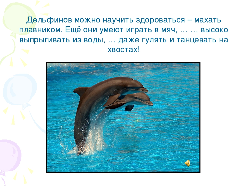 Дельфинов можно научить здороваться – махать плавником. Ещё они умеют играть...