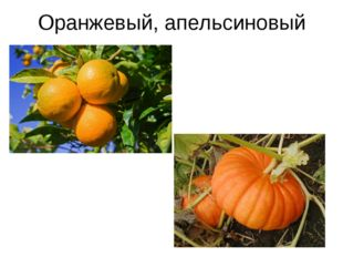 Оранжевый, апельсиновый