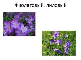 Фиолетовый, лиловый