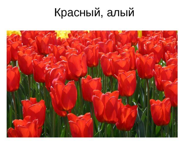 Красный, алый