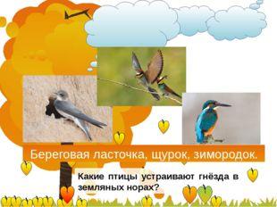 Береговая ласточка, щурок, зимородок. Какие птицы устраивают гнёзда в землян