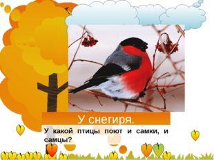 У снегиря. У какой птицы поют и самки, и самцы?