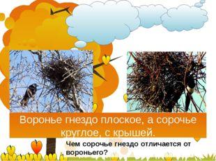 Воронье гнездо плоское, а сорочье круглое, с крышей. Чем сорочье гнездо отли