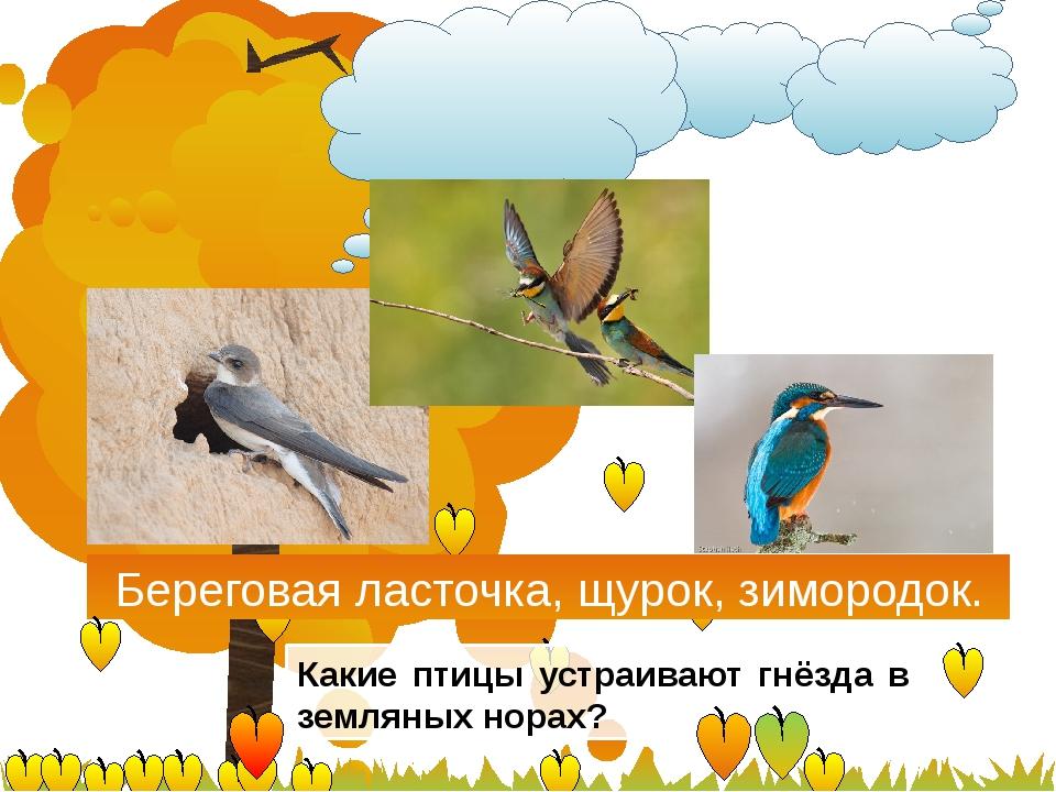 Береговая ласточка, щурок, зимородок. Какие птицы устраивают гнёзда в землян...