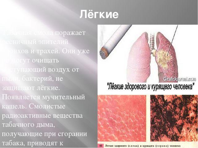 Лёгкие Табачная смола поражает ресничный эпителий бронхов и трахей. Они уже н...