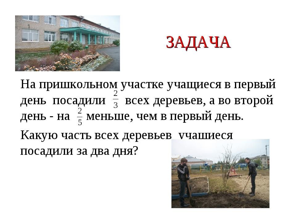 ЗАДАЧА На пришкольном участке учащиеся в первый день посадили всех деревьев,...