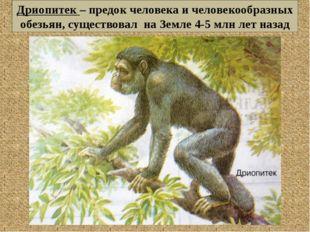 Дриопитек – предок человека и человекообразных обезьян, существовал на Земле